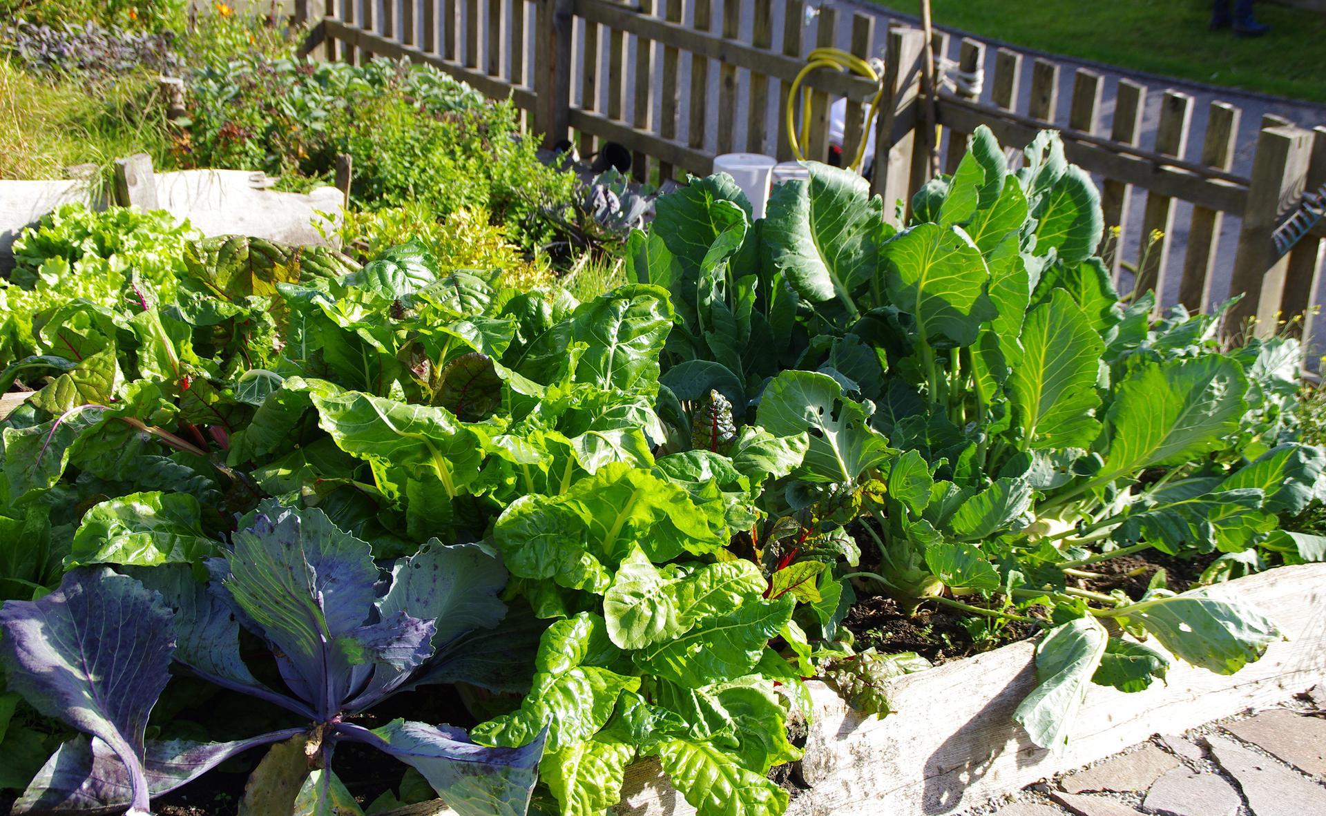 Bio-Produkte aus unserem eigenen Gemüsegarten