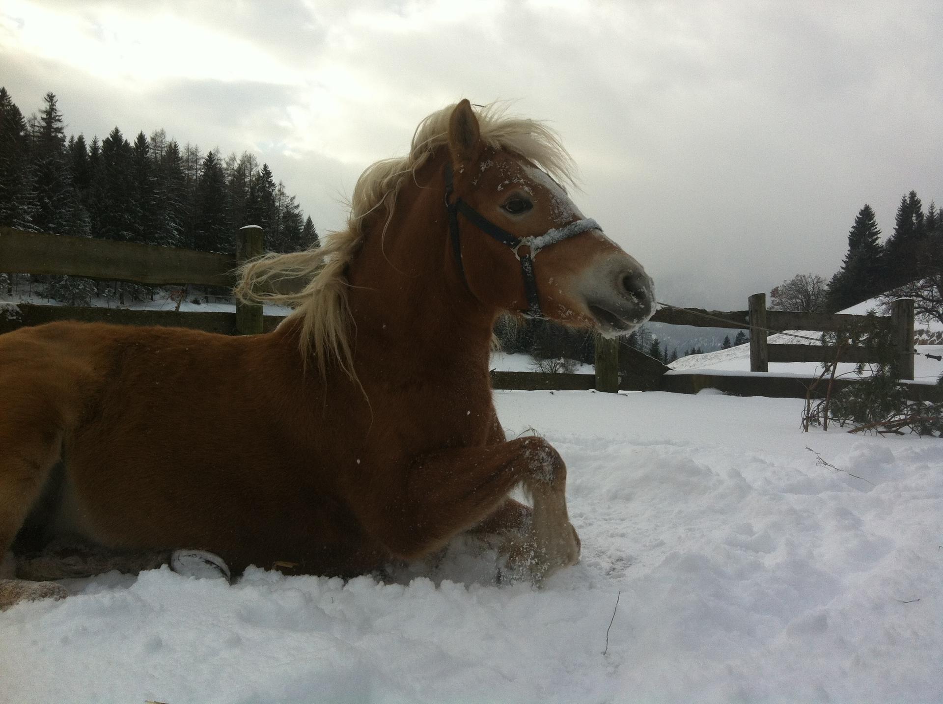 Nadin im Schnee