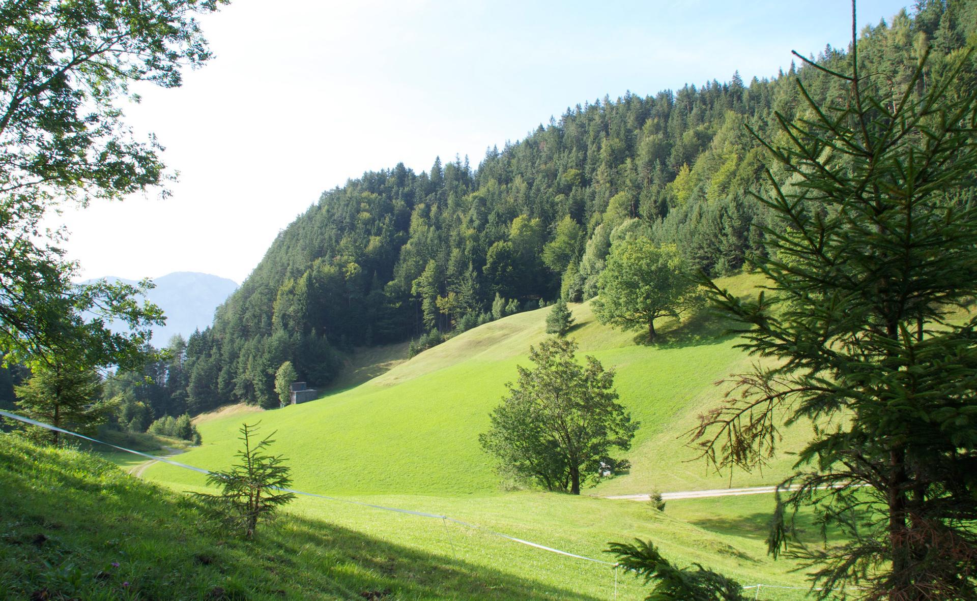 Sanfte Wälder und Wiesen