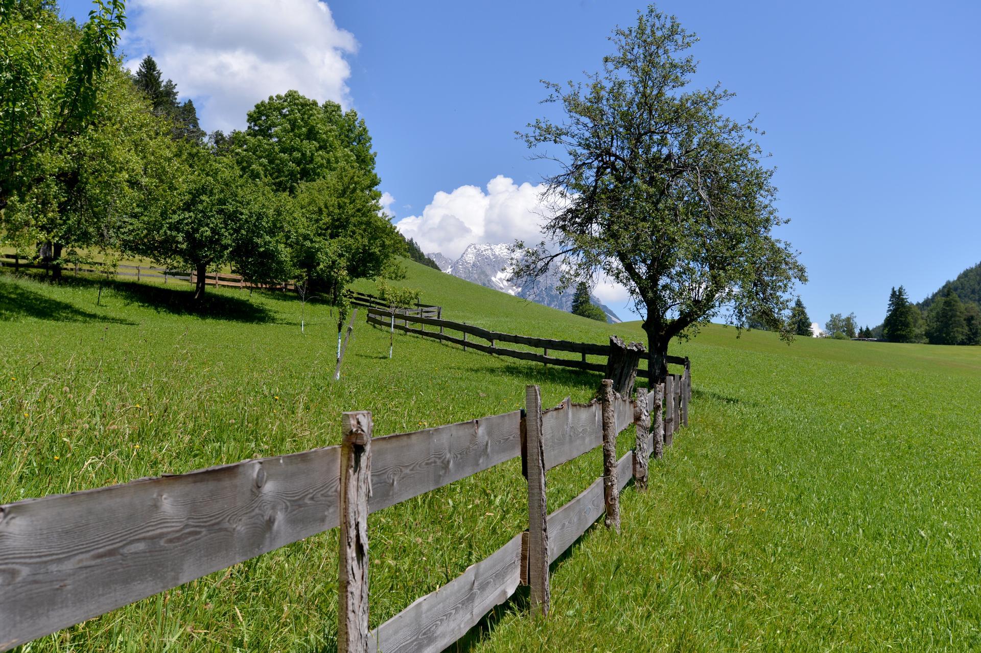 Wiesen und Felder um den Hof