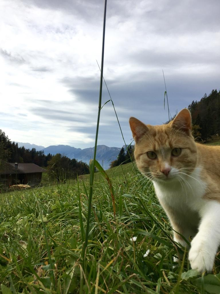 Kater Findus