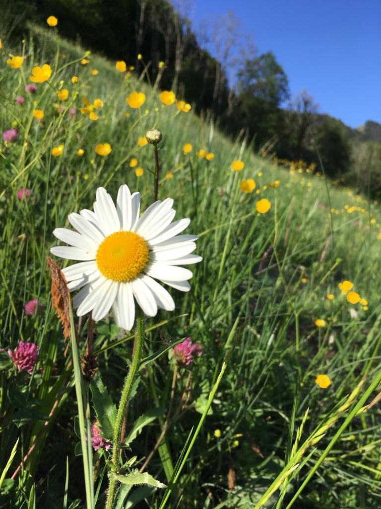 Beste Gräser, Blumen und Kräuter für unser Tiere