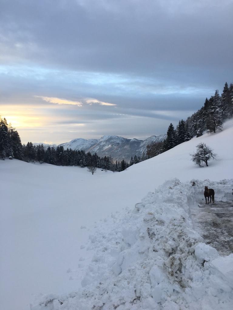 Auslauf im Winter